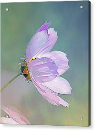 Flowing In The Wind Acrylic Print by Elaine Manley