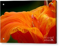 Flowing Acrylic Print by Jeannie Burleson