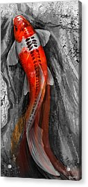 Flowing Koi Acrylic Print by Steve Goad