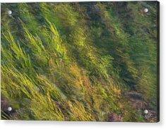 Flowing Luminescence Acrylic Print by Leland D Howard