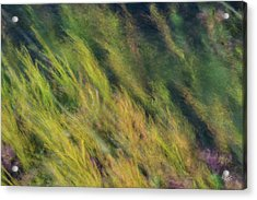 Flowing Textures Acrylic Print by Leland D Howard
