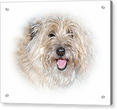 Acrylic Print featuring the photograph Fluff Pup by Debbie Stahre