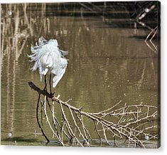 Acrylic Print featuring the photograph Fluff Time by Bill Kesler