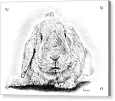 Fluffy Bunny Acrylic Print