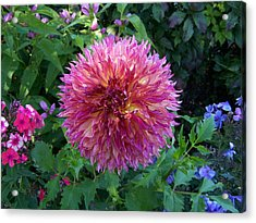 Fluffy Flower Acrylic Print by Colleen Neff