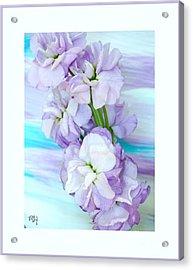 Fluffy Flowers Acrylic Print by Marsha Heiken