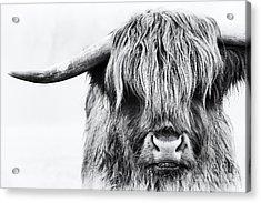 Fluffys Mate Acrylic Print