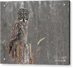 Flurries In The Forecast Acrylic Print by Heather King