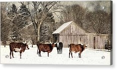 Acrylic Print featuring the photograph Flurries On The Farm by Robin-Lee Vieira