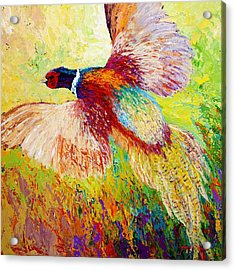 Flushed - Pheasant Acrylic Print by Marion Rose