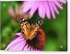 Fluttering Breeze Butterfly Acrylic Print by Christina Rollo