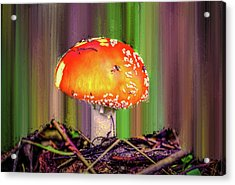 Acrylic Print featuring the photograph Fly Agaric #g7 by Leif Sohlman