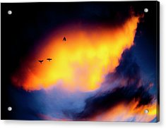 Acrylic Print featuring the photograph Fly Away by Eric Christopher Jackson