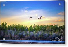 Fly Away Acrylic Print