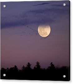 Fly By Night Square Acrylic Print by Bill Wakeley