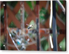 Fly By Acrylic Print by Peter  McIntosh