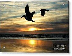 Fly Bye Acrylic Print by Lori Mellen-Pagliaro