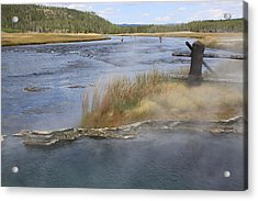 Fly Fishing And Geyser  Acrylic Print by Gayle Johnson