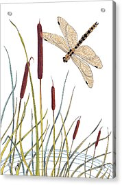Fly High Dragonfly Acrylic Print