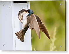 Fly In Meal Acrylic Print by Carl Jackson
