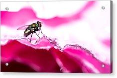 Acrylic Print featuring the photograph Fly Man's Floral Fantasy by T Brian Jones