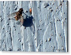 Acrylic Print featuring the photograph Fly On The Wall by Betty Northcutt