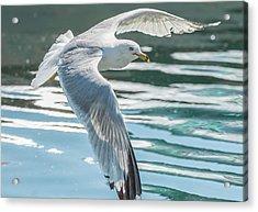 Flyby Acrylic Print