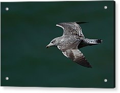 Flyby Acrylic Print by Richard Patmore