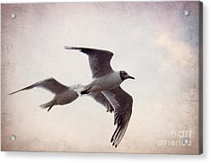 Flying Acrylic Print by Angela Doelling AD DESIGN Photo and PhotoArt