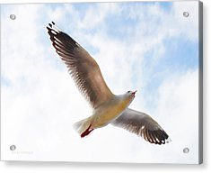 Flying Away From The Madness Acrylic Print