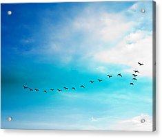 Flying Away Acrylic Print by Jose Rojas