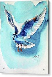 Flying Bird Acrylic Print by Kovacs Anna Brigitta