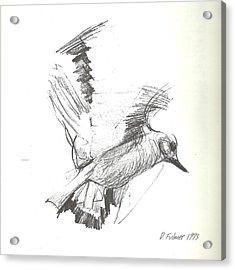 Flying Bird Sketch Acrylic Print