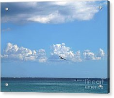 Acrylic Print featuring the photograph Flying By The Sea by Francesca Mackenney