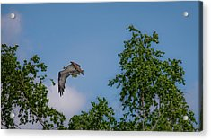 Acrylic Print featuring the photograph Flying Crappie by Onyonet  Photo Studios