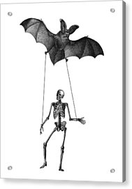 Flying Bat With Skeleton On A String Acrylic Print