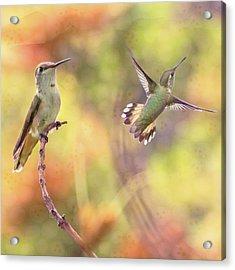 Flying Gems Acrylic Print