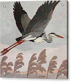 Flying Heron Acrylic Print