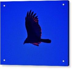 Flying High Acrylic Print by Helen Carson