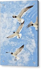 Acrylic Print featuring the photograph Flying High by Jan Amiss Photography