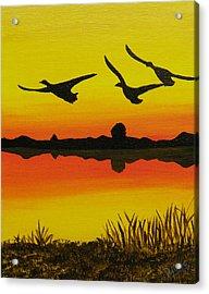 Flying Home Acrylic Print by Doug Wilkie