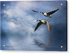Flying Home Acrylic Print