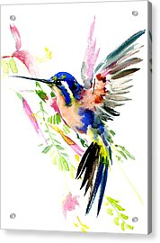 Flying Hummingbird Ltramarine Blue Peach Colors Acrylic Print by Suren Nersisyan