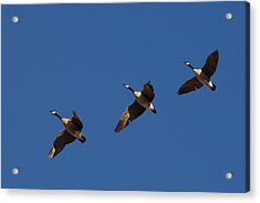 Acrylic Print featuring the photograph Flying In Formation by Monte Stevens