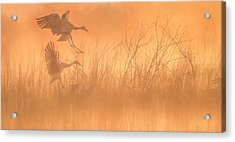 Flying Into The Light And Fog Acrylic Print