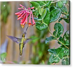 Flying Jewel Acrylic Print