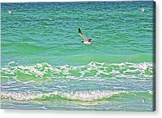 Flying Solo Acrylic Print by HH Photography of Florida