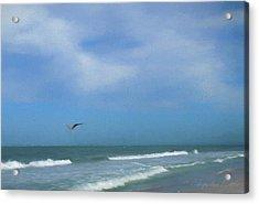 Flying Solo Acrylic Print