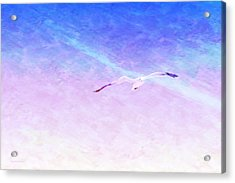 Flying Solo Acrylic Print
