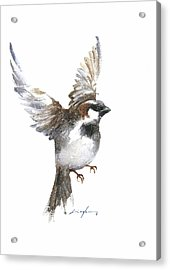 Flying Sparrow Watercolor Acrylic Print by Nitin Singh